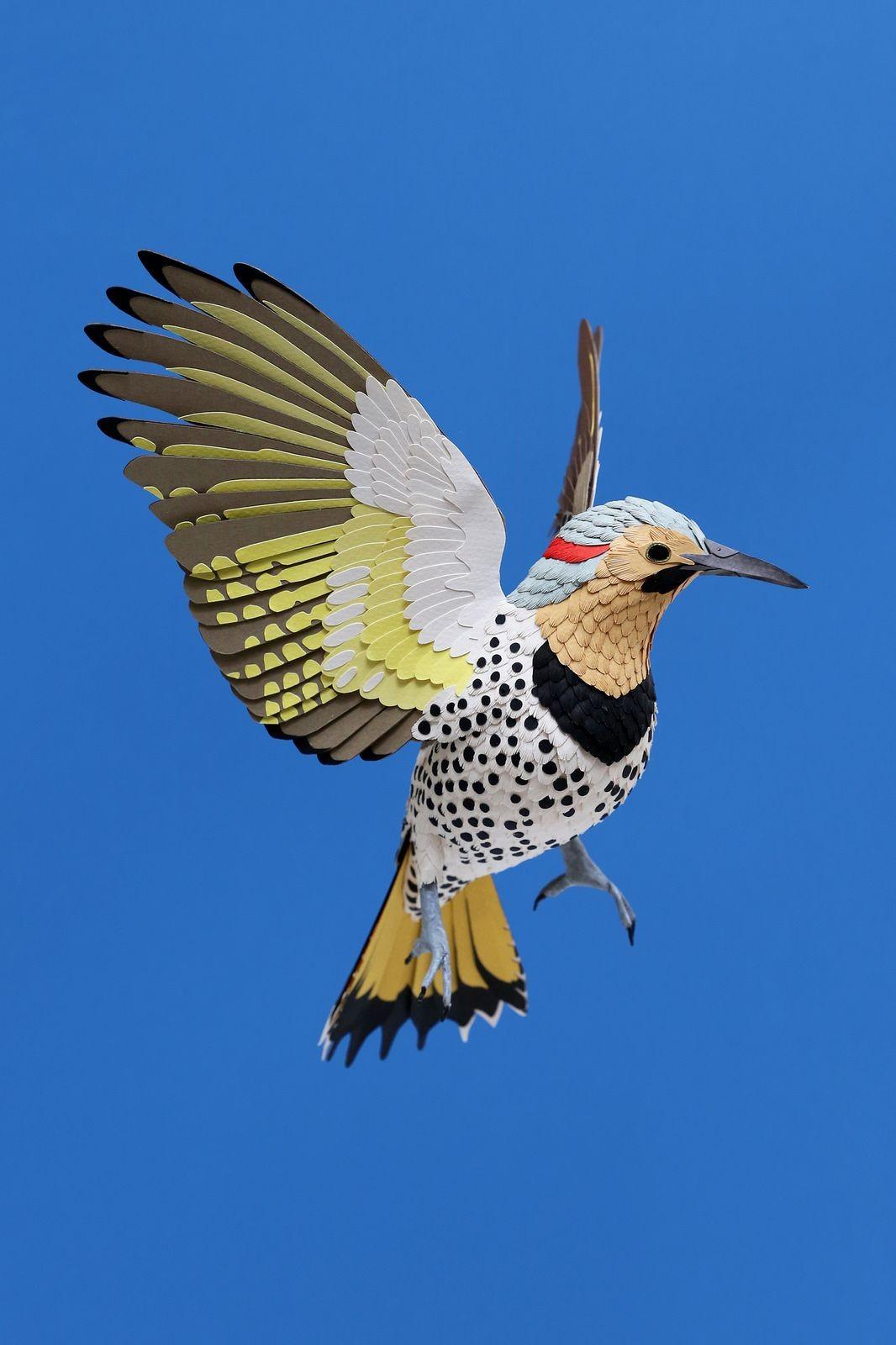 Bird Papercraft northern Flicker