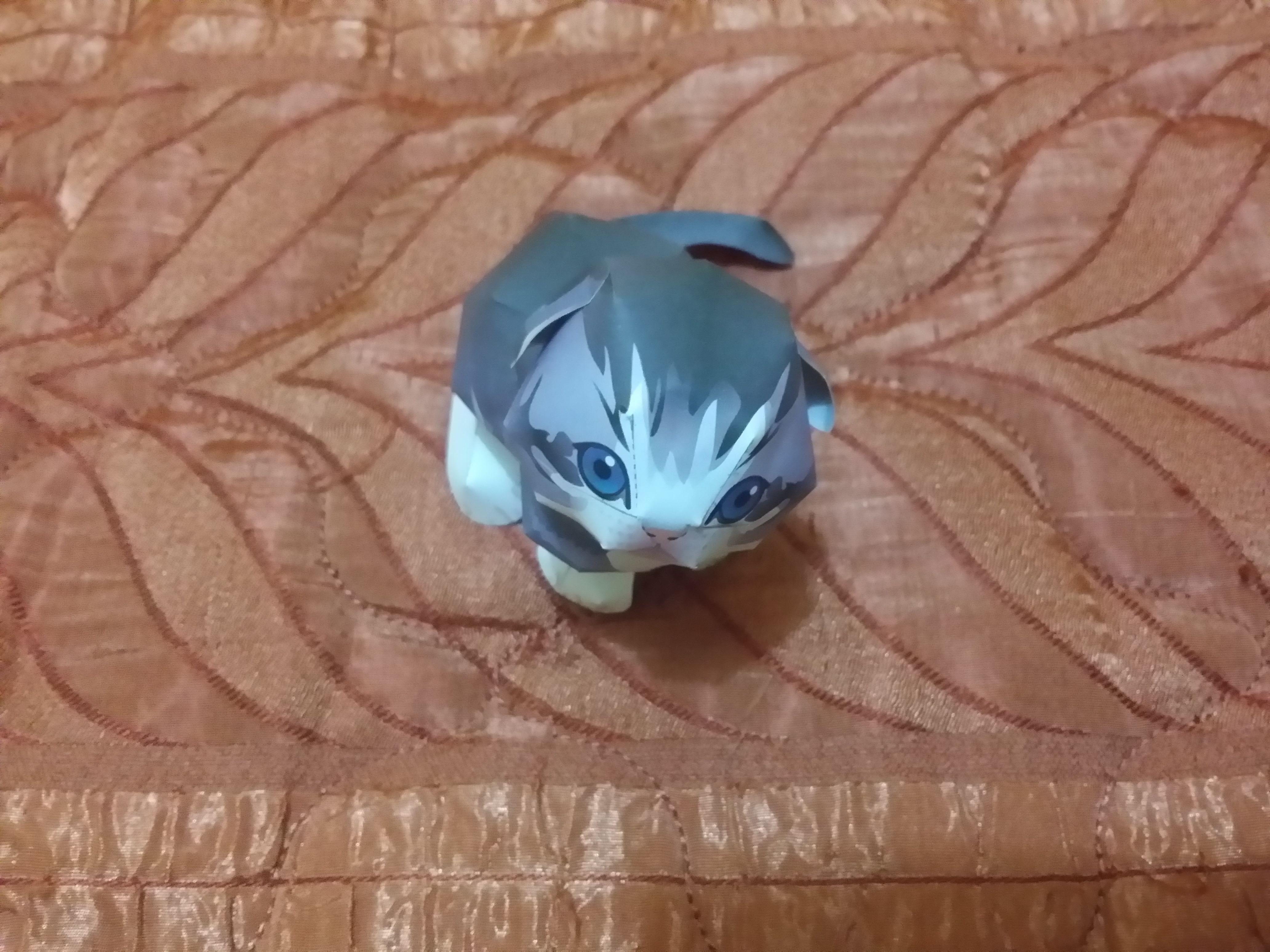 Dolphin Papercraft Scottish Fold Papercraft Pinterest