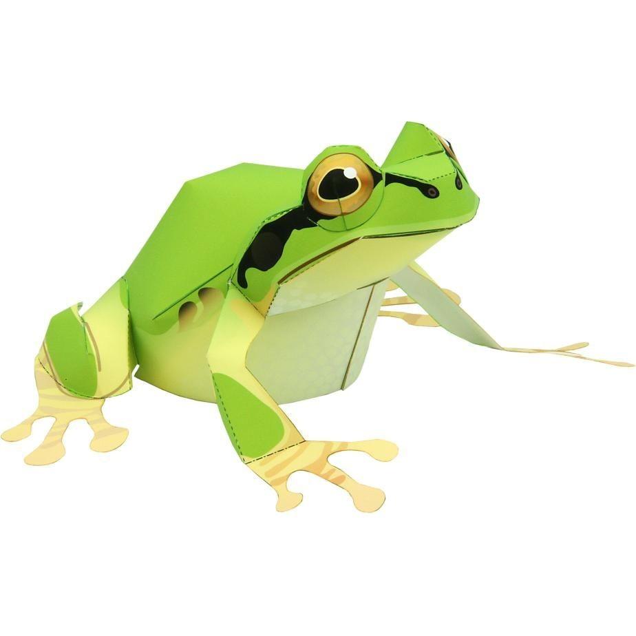 Frog Papercraft Boomkikker Dieren Papiermodellen Amfibie N Dieren Papiermodellen