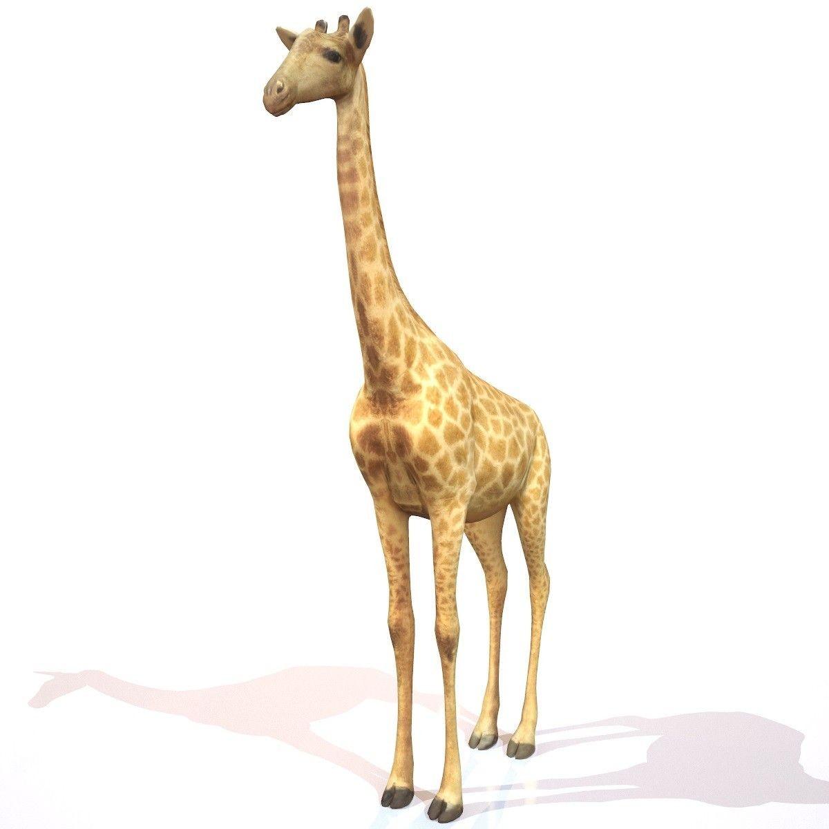 Giraffe Papercraft Giraffe Realistic 3d Model 3d Model 3d Modeling