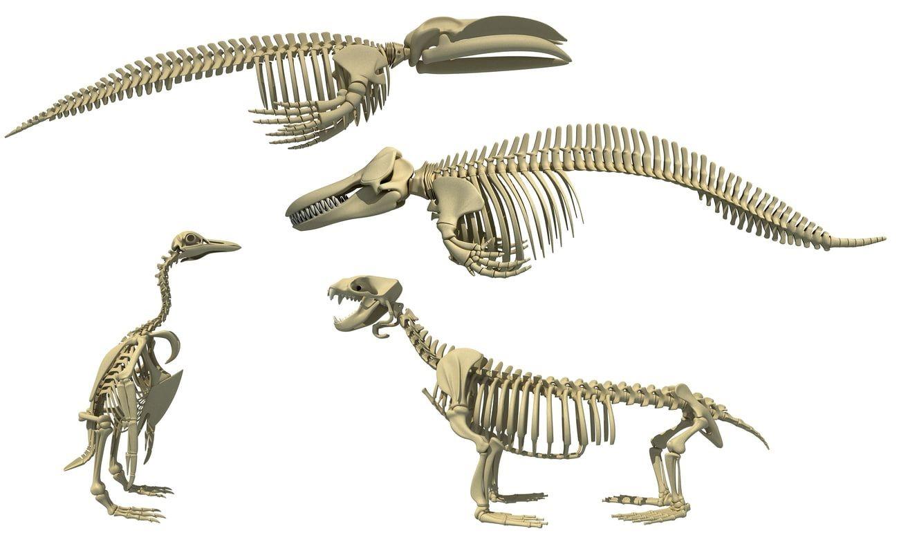 Skeleton Papercraft Aquatic Skeletons 3d Models Aquatic Skeletons