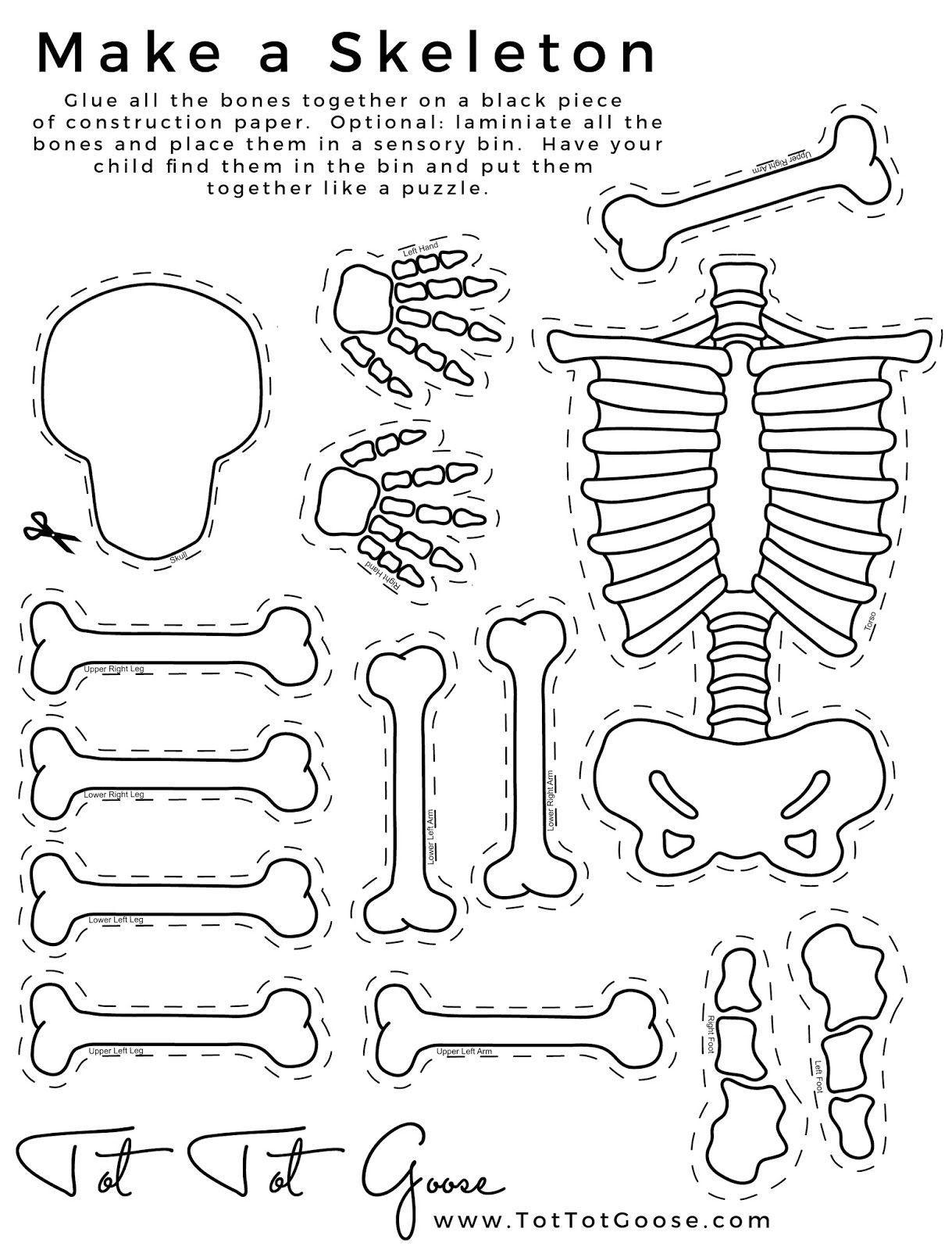 Skeleton Papercraft Skeleton Printable All About Me theme Preschool theme All About